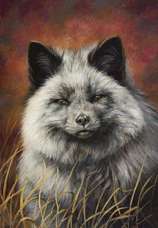 Серебристые лисицы